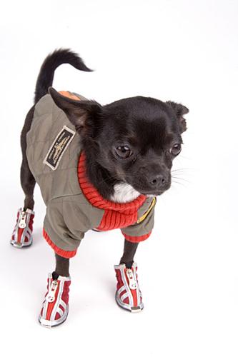 Обувь для собак зачем