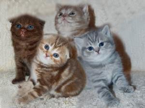 Котенок в доме Уход за котенком, воспитание - Мурлыки