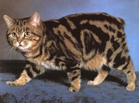 Что отличает их от других пород кошек